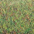 Spring 40 x 32'' -- Model Railroad Grass Mat -- #7221