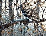 Wise Owl -- Paint By Number Kit -- #73-91428