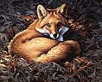 Sunlit Fox -- Paint By Number Kit -- #91380