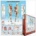 The Human Body with Systems & Senses (1000pc) -- Jigsaw Puzzle 600-1000 Piece -- #61000