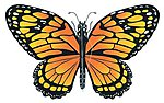 43''x26'' Monarch Butterfly Wing Flapper Kite -- Single Line Kite -- #840