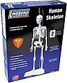 14'' Tall Human Skeleton
