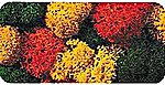 Autumn Lichen (Double Pack) -- Model Railroad Lichen -- #8620