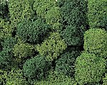Light & Dark Green Lichen (Double Pack) -- Model Railroad Lichen -- #8621