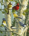 Song Bird Favorites -- Paint By Number Kit -- #22078