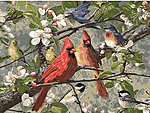 Songbirds in Cherry Blossom Tree Paint by Number (20''x16'')