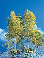 SuperTree(TM) Value Pack -- All Scale Model Railroad Tree -- #214