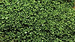 SuperLeaf Shaker medium green -- Model Railroad Ground Cover -- #6132