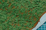 Diorama Texture Paint Grass Effect Green