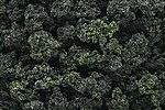 Bushes Clump Foliage -- Forest Blend -- Model Railroad Grass Earth -- #fc149