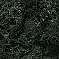Lichen Dark Green (1.5 Quarts) -- Model Railroad Lichen -- #l164